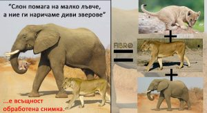Слонът заблуда