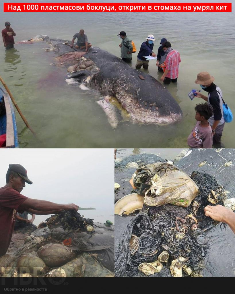 боклуци в стомаха на кит