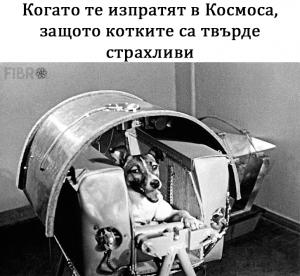 Лайка в Космоса