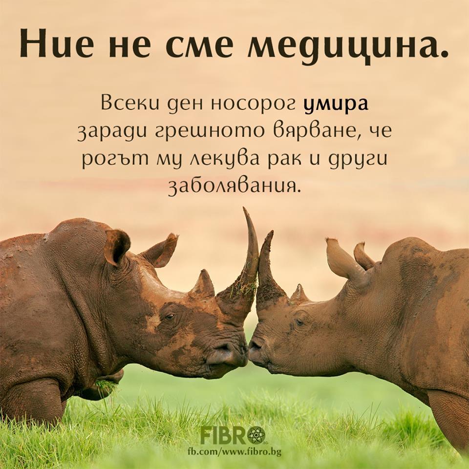 Носорози са убивани заради алтернативна медицина